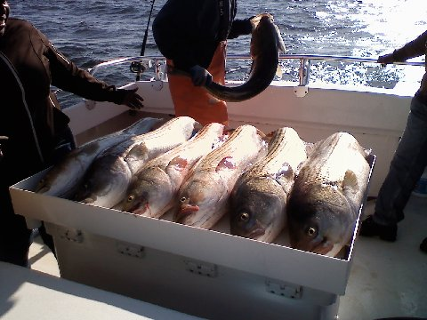 Chesapeake Beach Sport Fishing